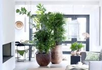 C.M.C HABITAT votre cabinet de conseils en travaux de rénovation à Cagnes-sur-Mer se renseigne pour vous sur les plantes dépolluantes!